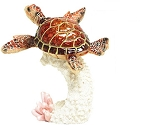 Sea Turtle on Coral