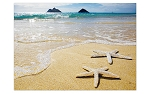 Greeting Card Lanikai Starfish