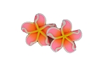 Jennibeans mini star shaped plumeria earrings