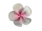 Jennibeans small plumeria earrings