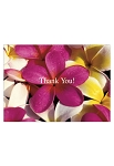 Greeting Card Thank you Plumeria